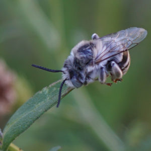 Photo of Close-up of sleeping Urbane Digger male